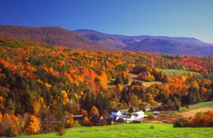 Autumn foliage in the Berkshires