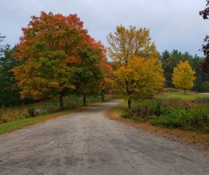 dirt roadway with yellow maple