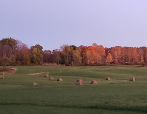 Hay bales in field with fall foliage in background