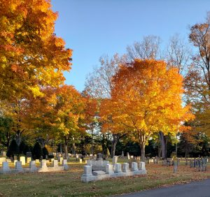 Golden foliage on tree in cemetery