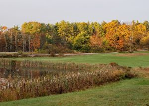 Pond with cattails in the foreground surrounded by autumn foliage