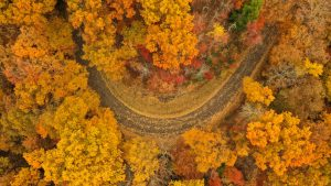 road winding through autumn foliage