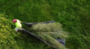Man pulling tarp loaded with loose hay